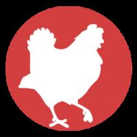 Aliments pour poules, canards, oies, poulailler, graines - Promodog