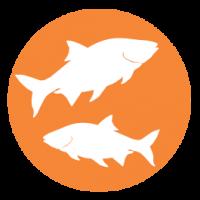 Aliments pour poissons et aquariums
